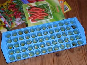 ice cube tray seed